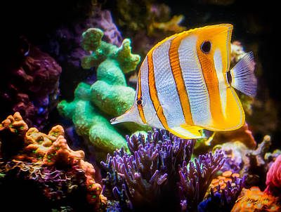 Photograph - Butterfly Of The Sea by Rikk Flohr