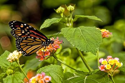Pollinate Digital Art - Butterfly On A Flower by Alexander Mendoza