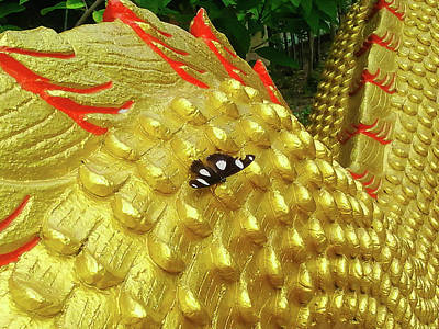 Aesthetic Photograph - butterfly on a Golden dragon by Aleksei lomanov Barsuk