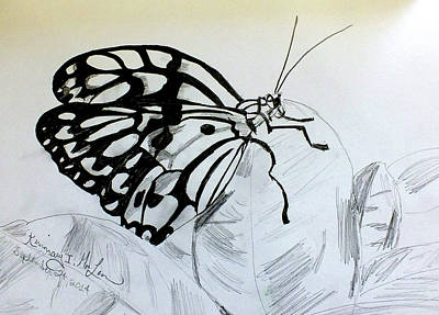 Drawing - Butterfly On A Leaf by Kimmary I MacLean
