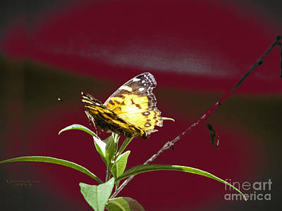 Photograph - Butterfly On A Stick by Melissa Messick