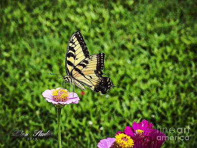 Photograph - Butterfly On A Zinnia by Melissa Messick