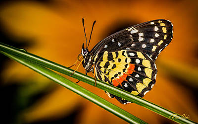 Photograph - Butterfly On Color by Rikk Flohr