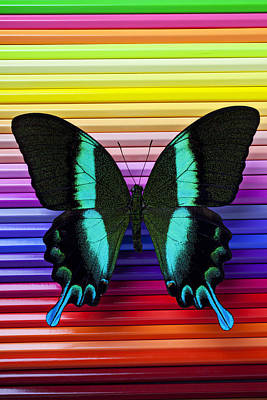 Butterfly On Colored Pencils Art Print by Garry Gay