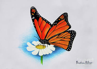 Margherita Painting - Butterfly On Daisy by Cristian Cris
