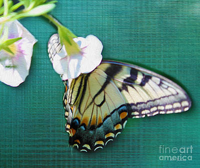 Photograph - Butterfly On Digital Linen by Nina Silver