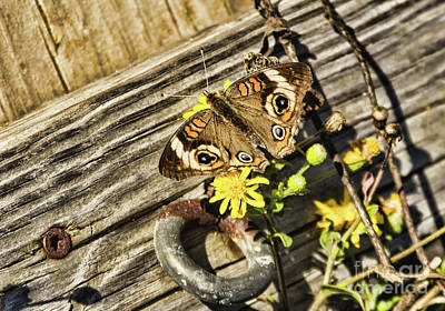 Photograph - Butterfly On Dock by Steven Parker