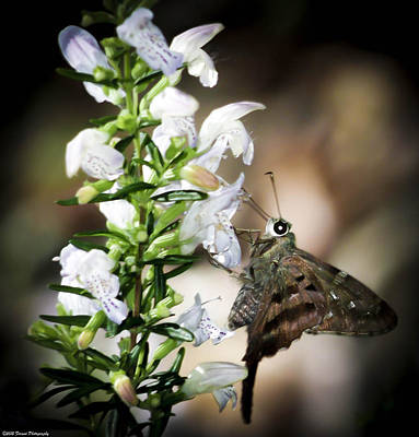 Photograph - Butterfly On Flower  by Debra Forand