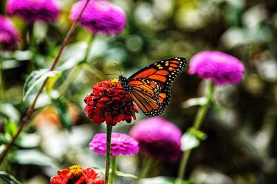 Photograph - Butterfly On Flower  by Joseph Caban