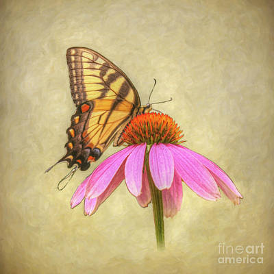 Digital Art - Butterfly On Flower by Randy Steele