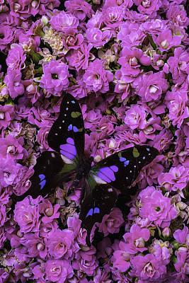 Butterfly On Kalanchoe Plant Art Print