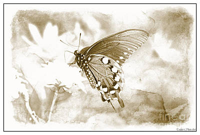 Photograph - Butterfly On Lantana - Black And White by Debbie Portwood