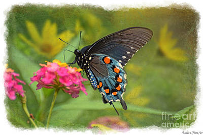 Photograph - Butterfly On Lantana by Debbie Portwood