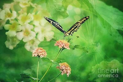 Butterfly On Lantana Montage Art Print