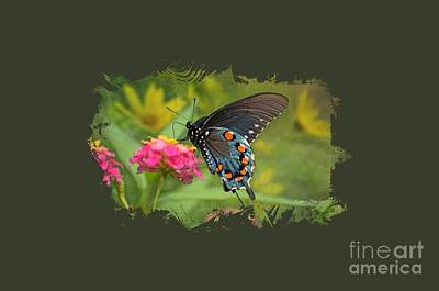 Photograph - Butterfly On Lantana - Tee Shirt Design by Debbie Portwood