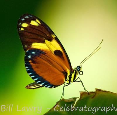 Butterfly On Leaf Art Print by Bill Lawry