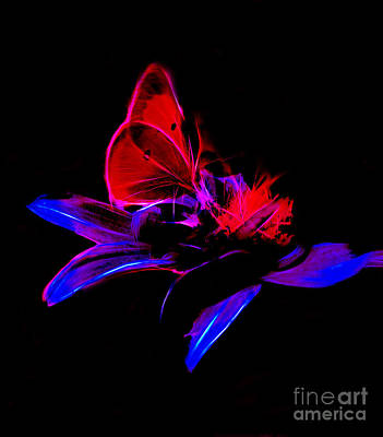 Photograph - Butterfly On Petals by Steven Parker