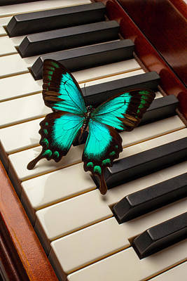Keyboards Photograph - Butterfly On Piano Keys by Garry Gay