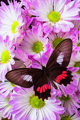 Pom Pom Photograph - Butterfly On Poms by Garry Gay