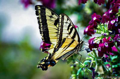 Butterfly On Purple Flowers Art Print