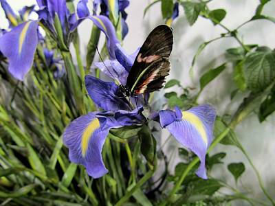 Photograph - Butterfly On Purple Iris by Sandra Cutrer