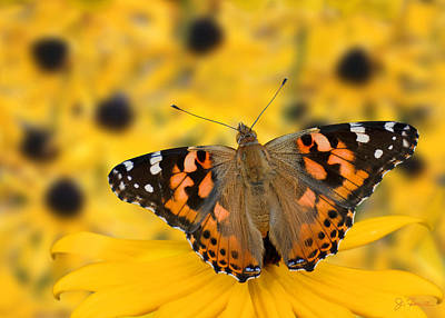 Photograph - Butterfly On Rudbeckia by Joe Bonita