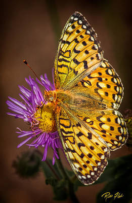Photograph - Butterfly On Spent Purple Blossom by Rikk Flohr