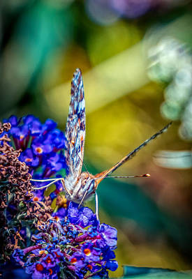 Photograph - Butterfly On The Flowers 3 by Lilia D