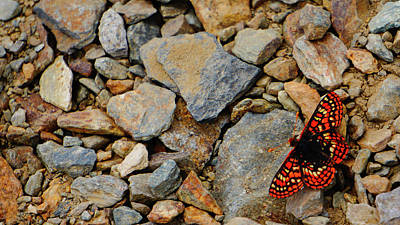 Photograph - Butterfly On The Rocks Yosemite by Lawrence S Richardson Jr