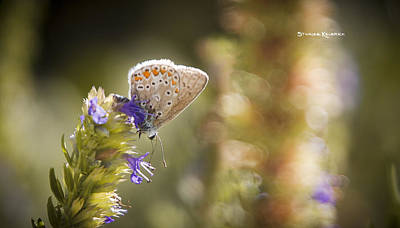 Photograph - Butterfly On The Spot by Stwayne Keubrick