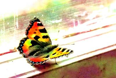 Winter Animals - Butterfly on the window frame watercolor by Lenka Rottova