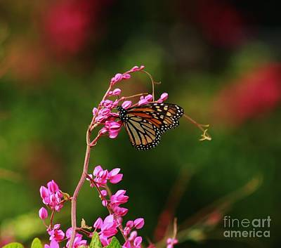 Photograph - Butterfly On Top by Craig Wood