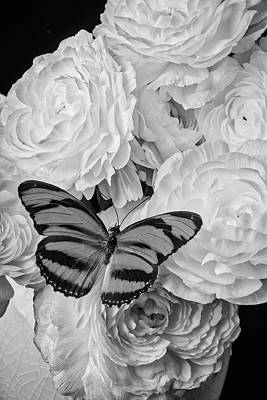 Black And White Insect Photograph - Butterfly On White Ranunculus by Garry Gay