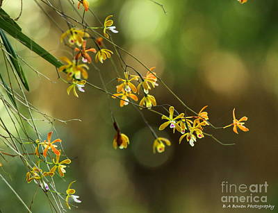 Cotee River Photograph - Butterfly Orchid by Barbara Bowen