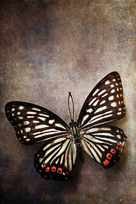 Photograph - Butterfly Over Textured Background by Stephanie Frey