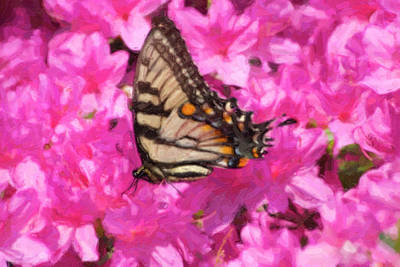 Digital Art - Butterfly Painting by Jill Lang