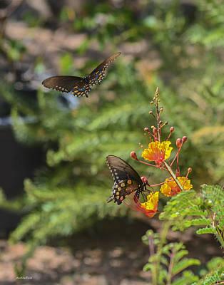 Photograph - Butterfly Pas De Deux by Allen Sheffield