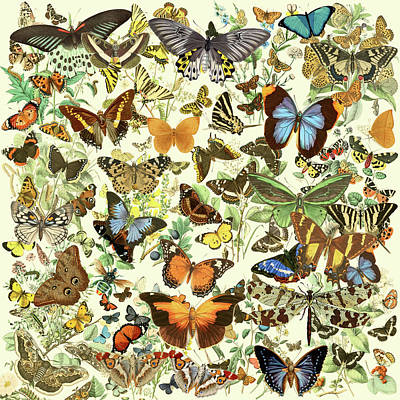 Painting - Butterfly Pattern by Gary Grayson