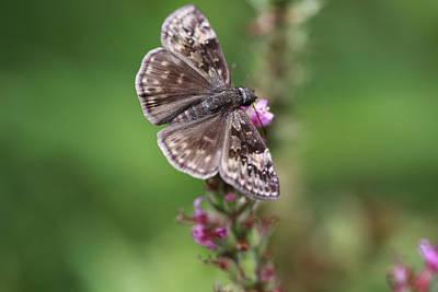 Butterlfy Photograph - Butterfly by Paul Slebodnick
