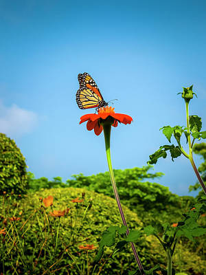 Butterfly Perch Art Print