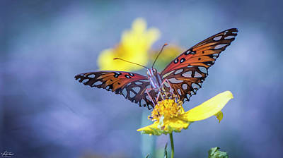 Photograph - Butterfly by Phil and Karen Rispin