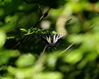 Photograph - Butterfly Photo #60 by Ben Upham III