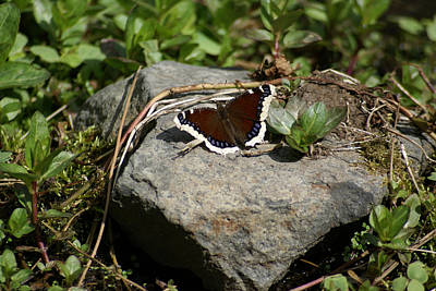 Photograph - Butterfly Photo #69 by Ben Upham III