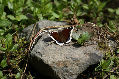 Photograph - Butterfly Photo #70 by Ben Upham III