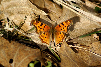 Photograph - Butterfly Photo #71 by Ben Upham III