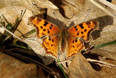 Photograph - Butterfly Photo #72 by Ben Upham III