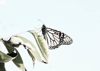 Photograph - Butterfly  by Photography by Tiwago