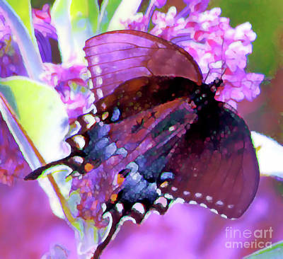 Photograph - Butterfly Pink Purple by Shirley Moravec