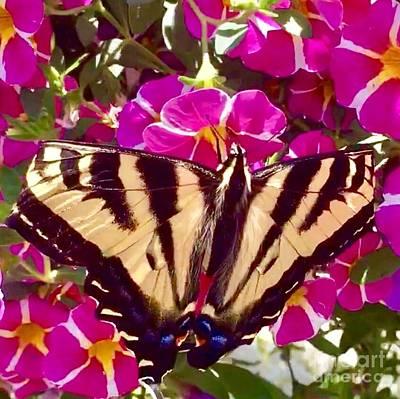 Photograph - Swallowtail Butterfly Pink by Susan Garren
