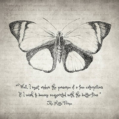 Art Paper Drawing - Butterfly Quote - The Little Prince by Taylan Apukovska